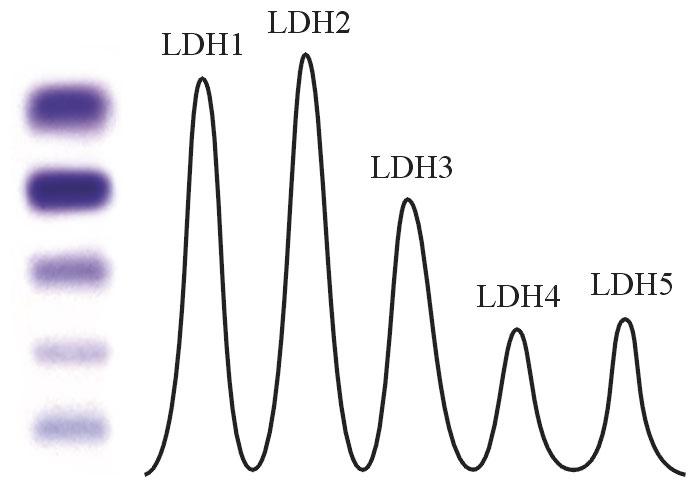 grafico_LDH