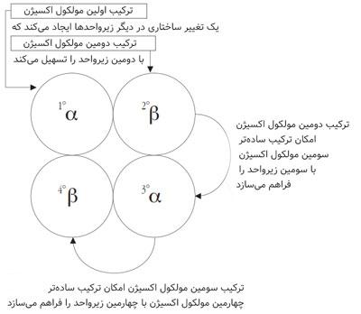 اثر آلوستریک و ترکیب cooperative در هموگلوبین