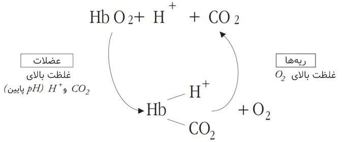 اثر Bohr